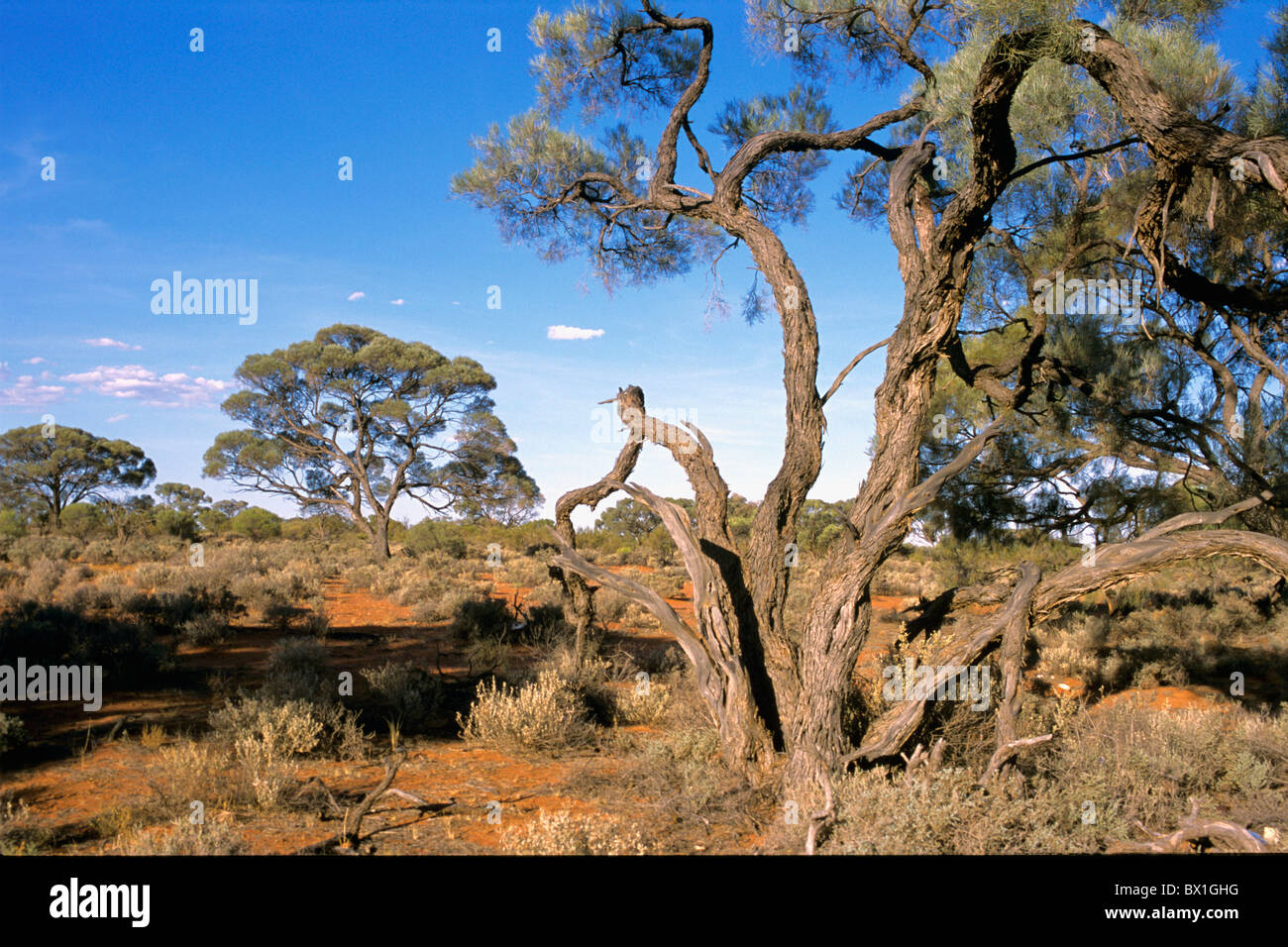 Australia outback scenery landscape south australia trees for South australia landscape
