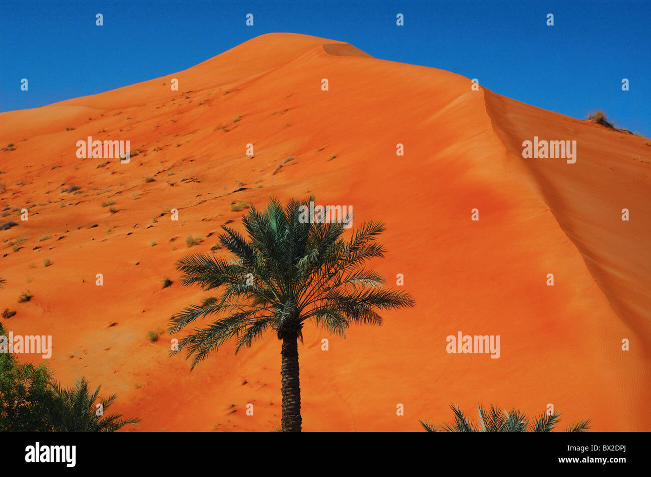 Desert sand dunes reddish palms scenery al salamat united arab desert sand dunes reddish palms scenery al salamat united arab emirates uae arabian peninsula sciox Images