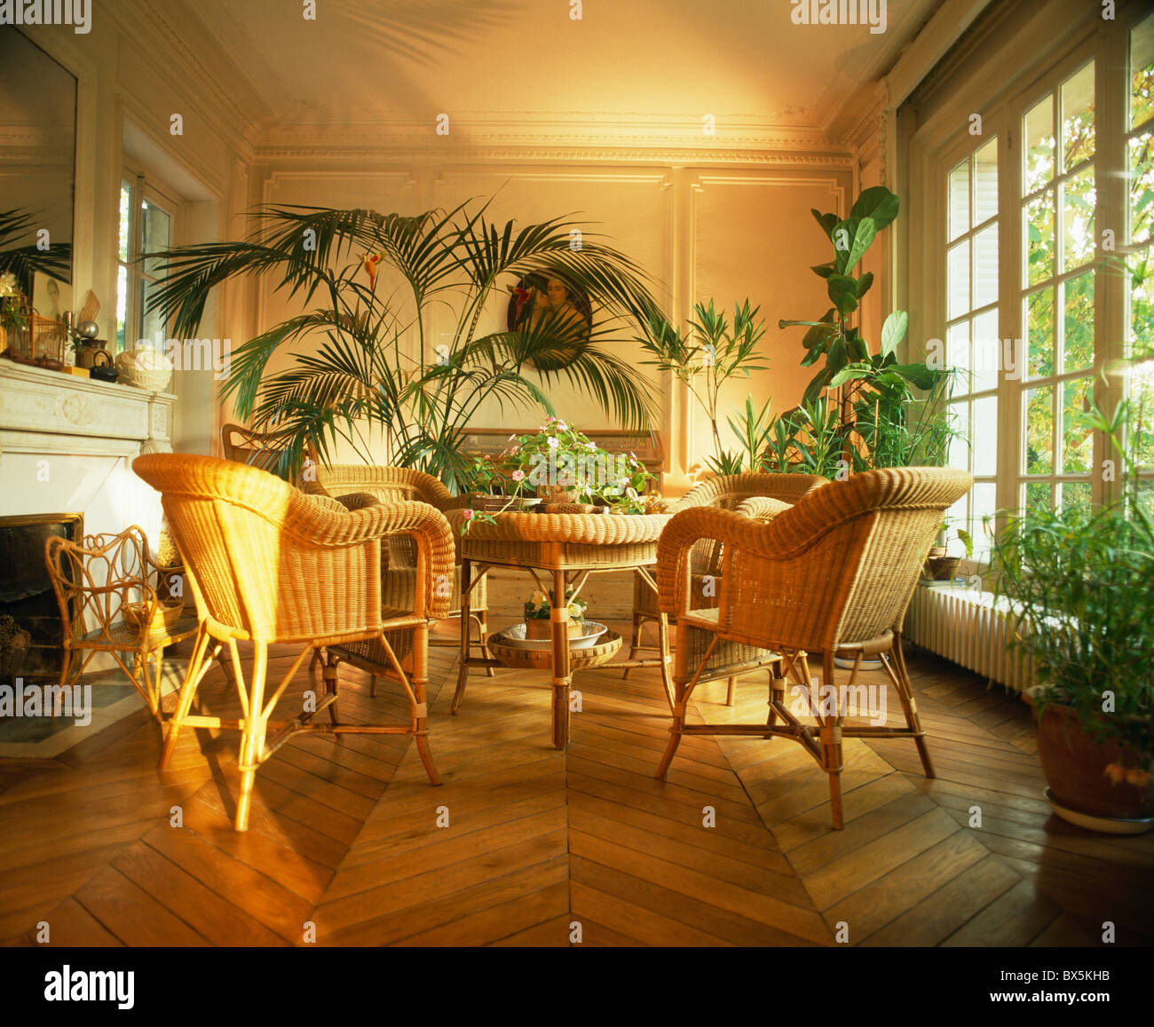 cane chairs and lush green houseplants in french townhouse dining cane chairs and lush green houseplants in french townhouse dining room with wooden parquet flooring