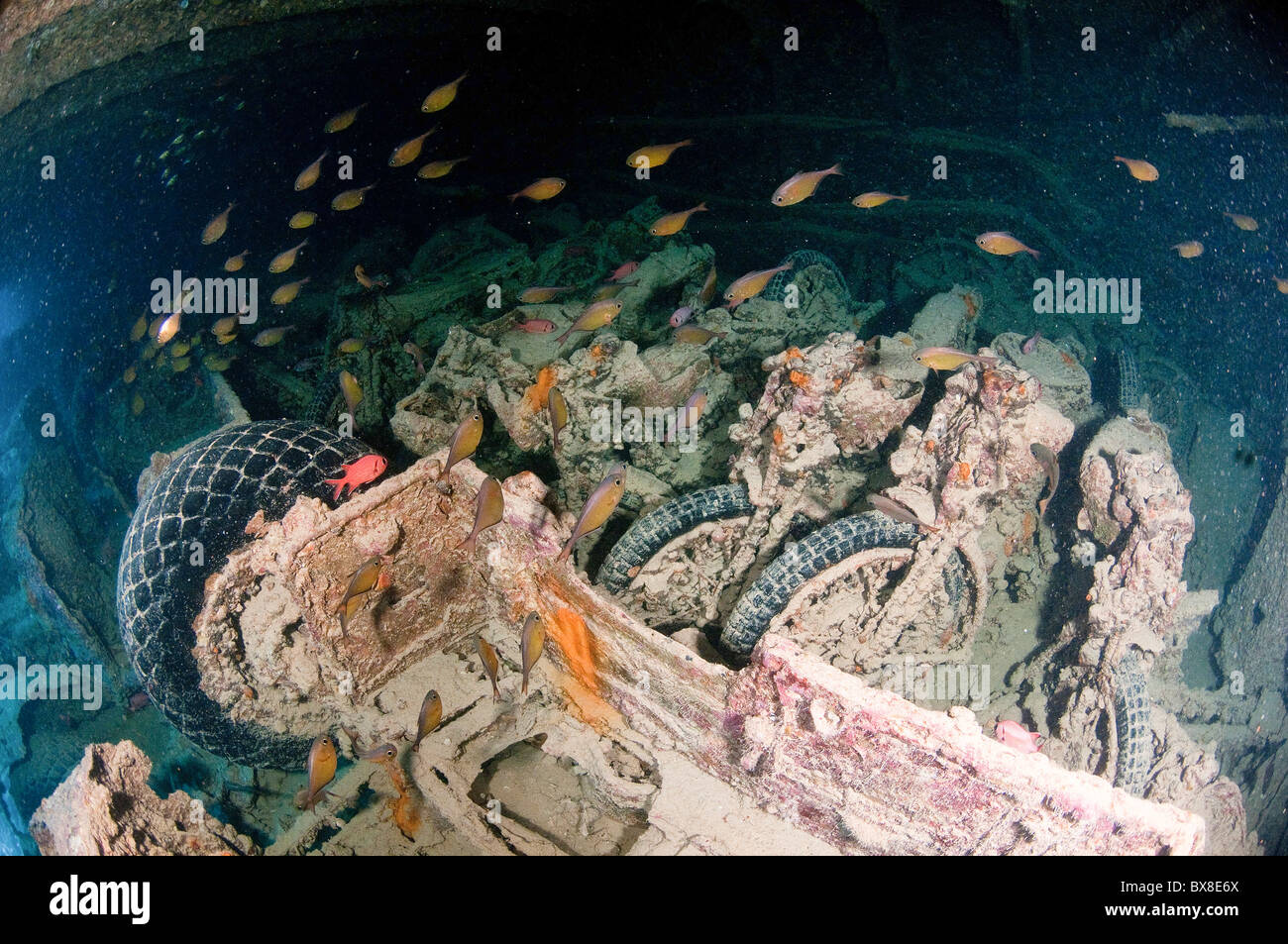 Underwater photography of a sunken ship wreck carrying a ...