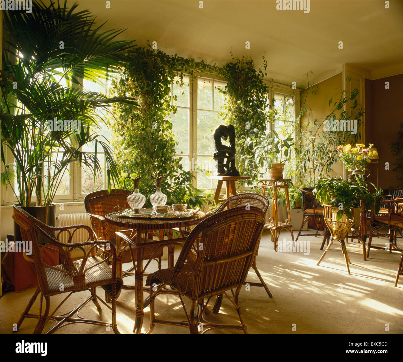cane chairs and tables with potted palm and tall green climbing cane chairs and tables with potted palm and tall green climbing houseplants in french townhouse dining room with cream flooring
