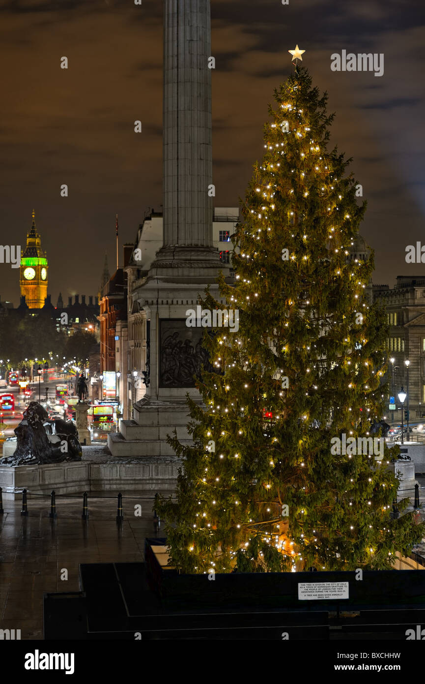 Norwegian Christmas Tree, Trafalgar Square, London, England, UK, given each  year by the people of Oslo. Selective focus on tree.