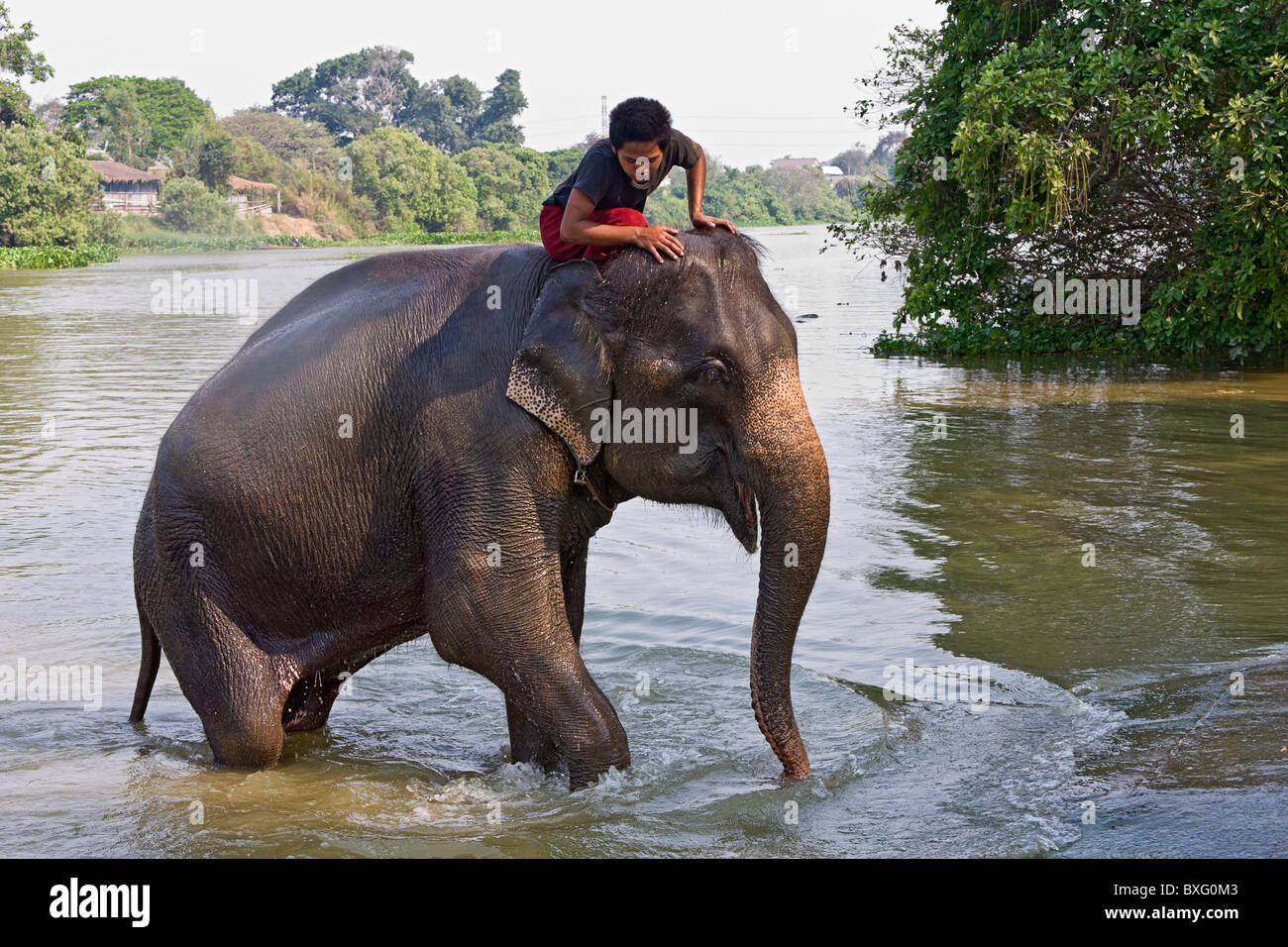 Riding elephants as they swim in a river at Elephant Stay ...