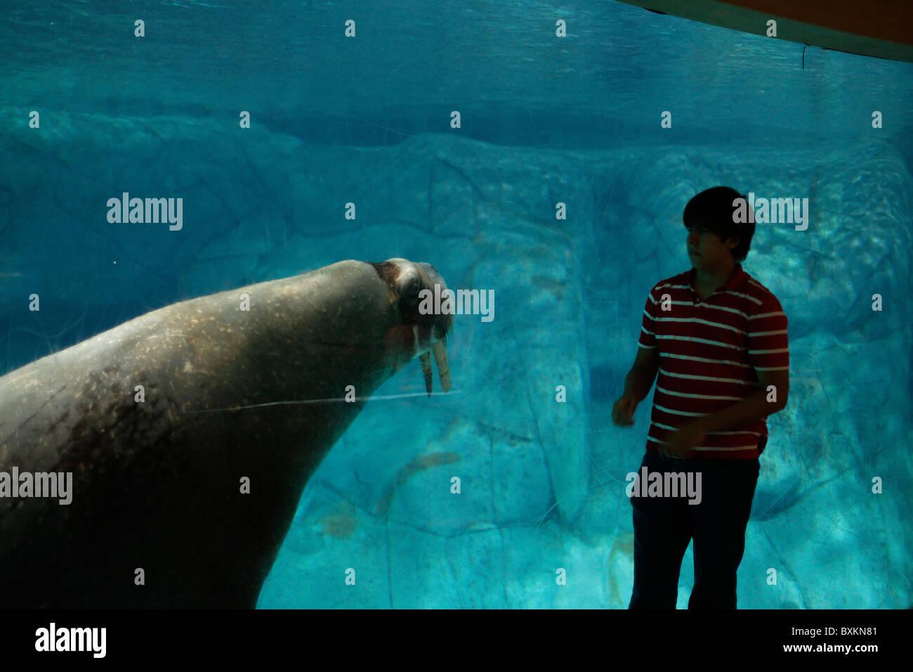 Walrus l 39 oceanografic the largest aquarium in europe for Aquarium valencia precio