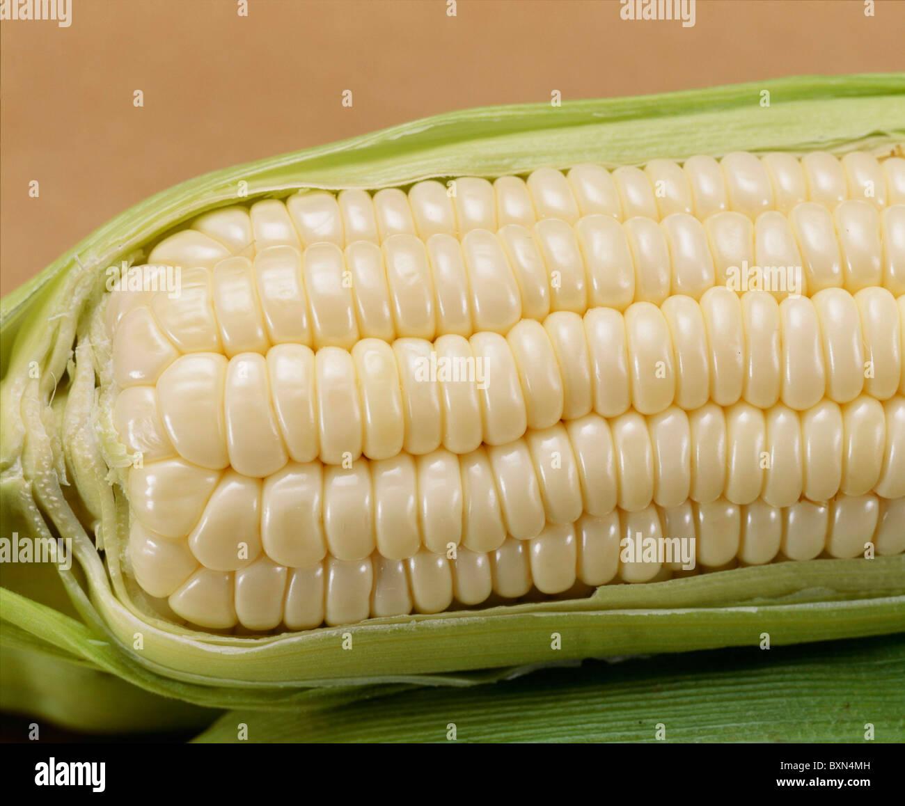Sweet Corn Sliver Queen Studio Stock Photo Royalty