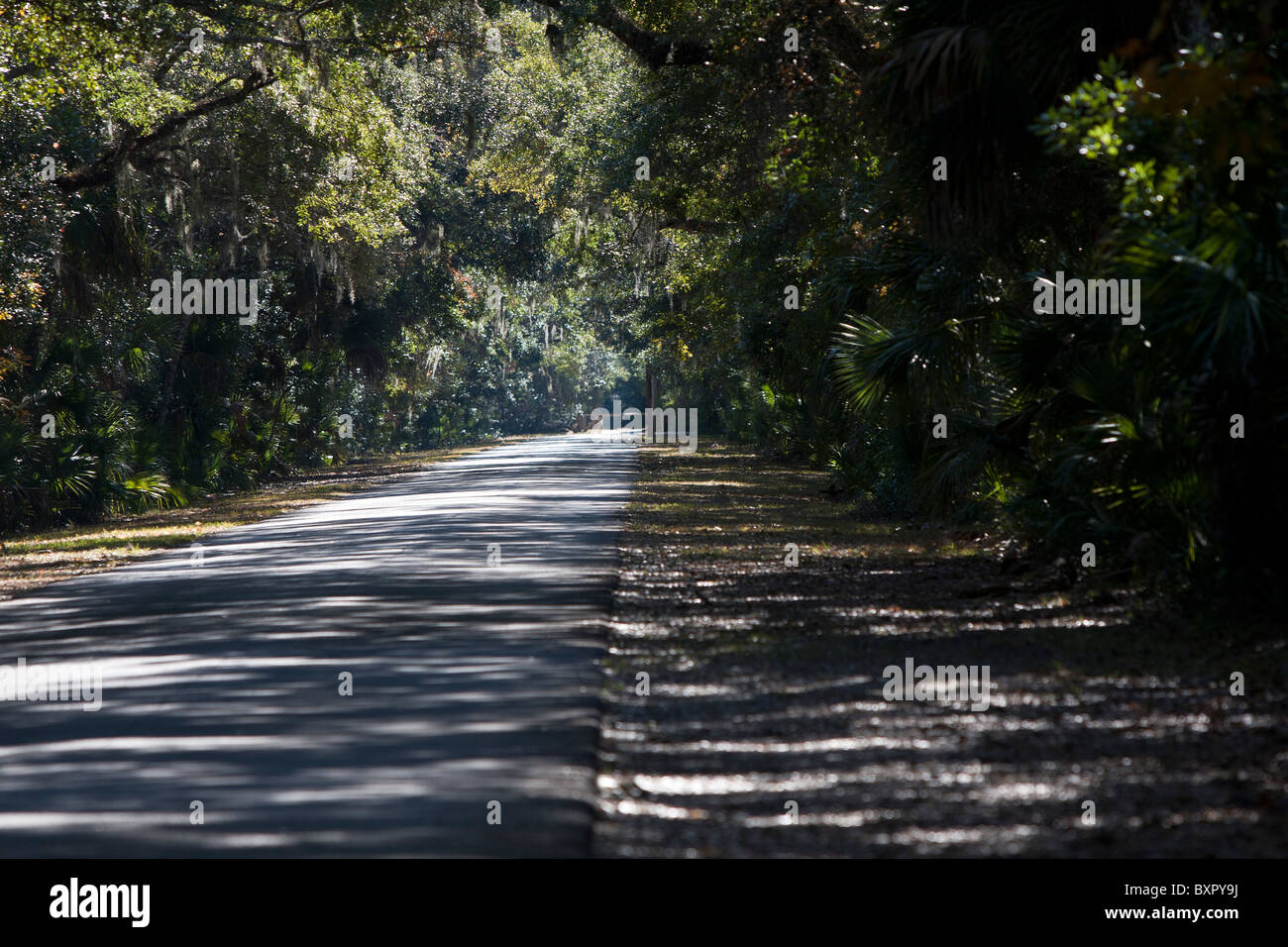 Scenic canopy drive in a Florida State park & Scenic canopy drive in a Florida State park Stock Photo Royalty ...