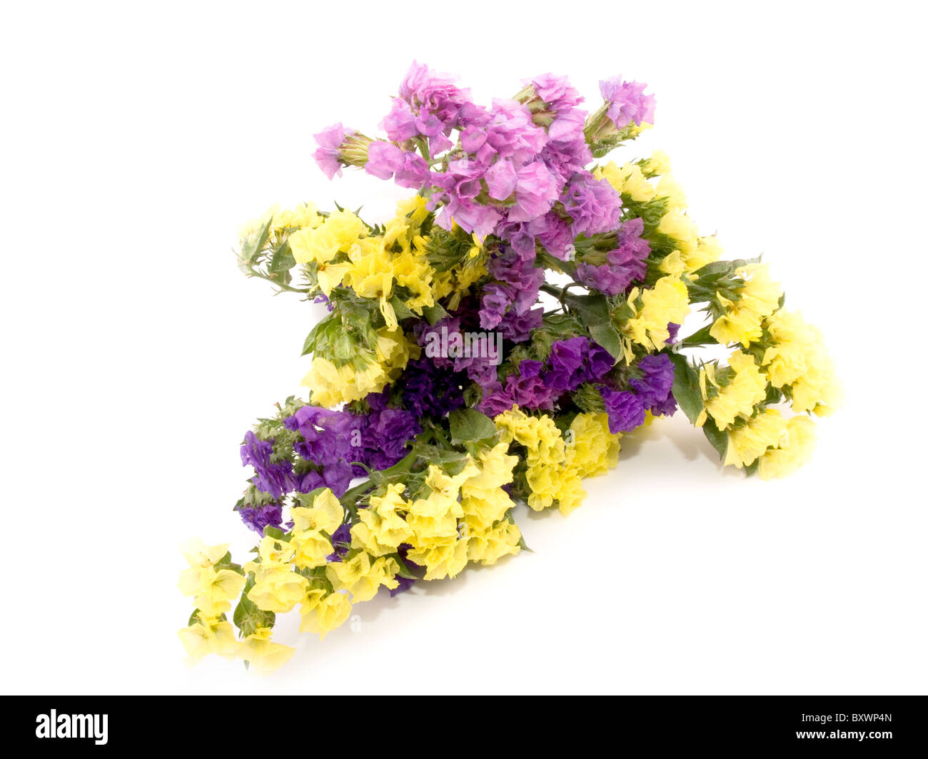 Bouquet of beautiful statice flowers on white background stock photo bouquet of beautiful statice flowers on white background mightylinksfo