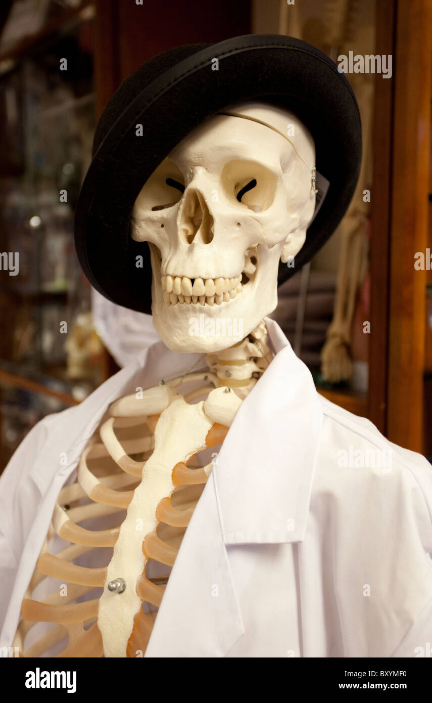 human skeleton wearing hat and a lab coat, london, england, uk, Skeleton