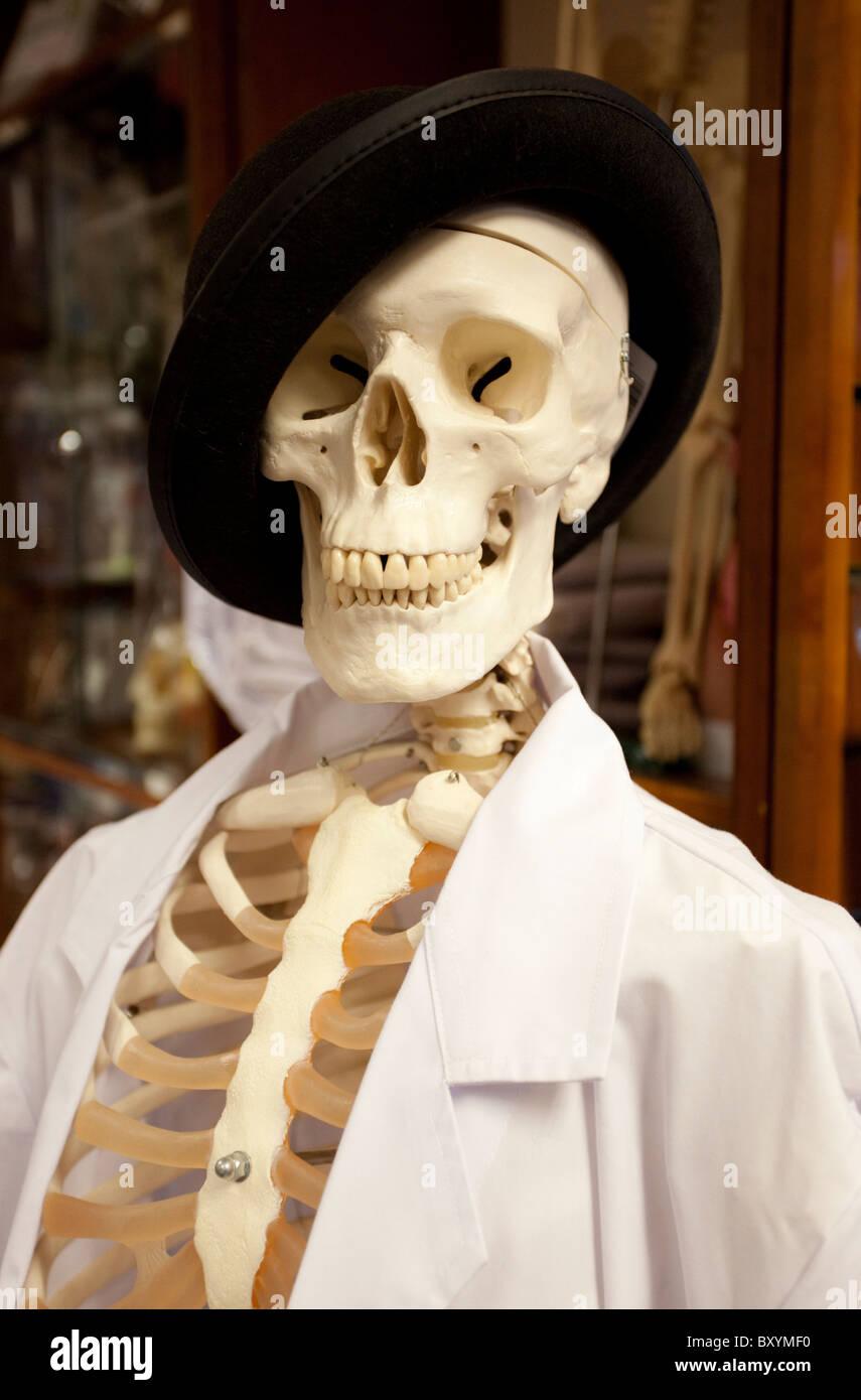 human skeleton wearing hat and a lab coat, london, england, uk, Skeleton