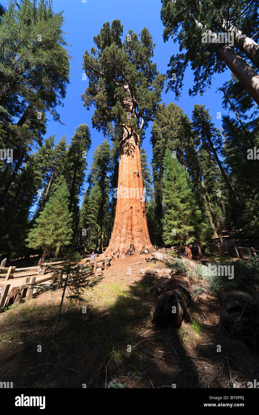 General Sherman Tree Sequoia National Park In