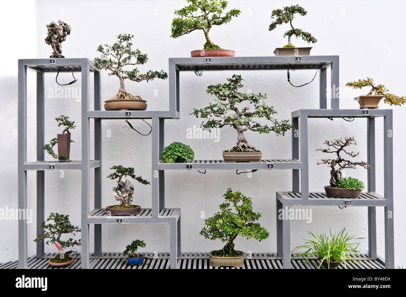 Exhibition Stand Tree : Japanese bonsai trees on display inside montreal s