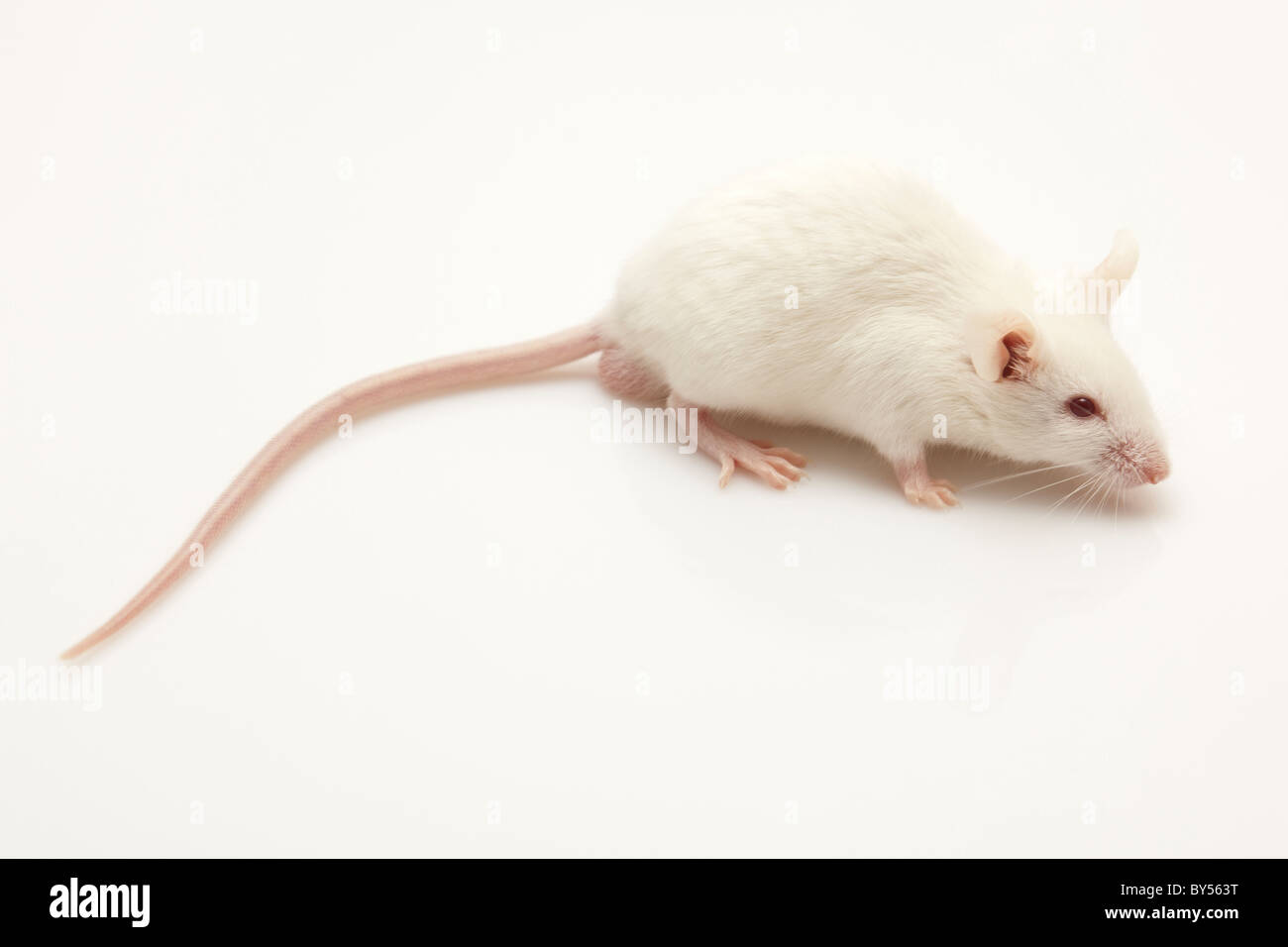 little live pets mouse instructions
