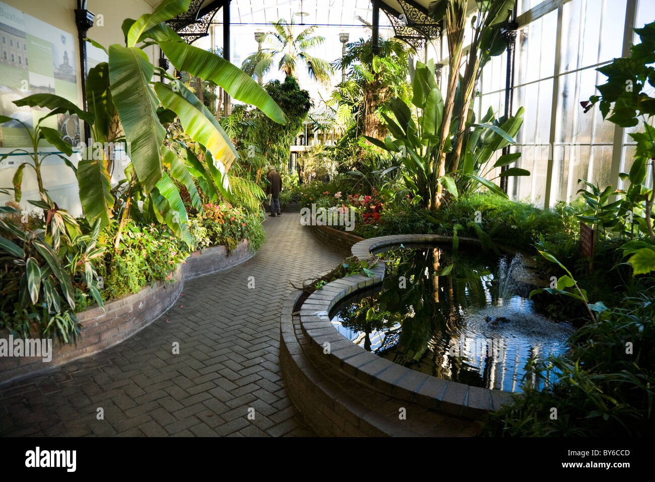 buxton pavillion gardens (botanical garden) tropical plants