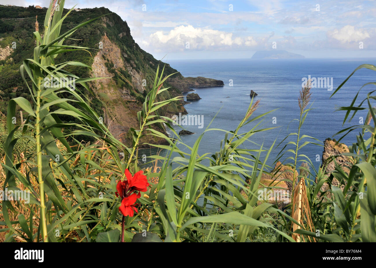 Vegetation And North Coast Island Of Flores Azores Portugal - Portugal vegetation map