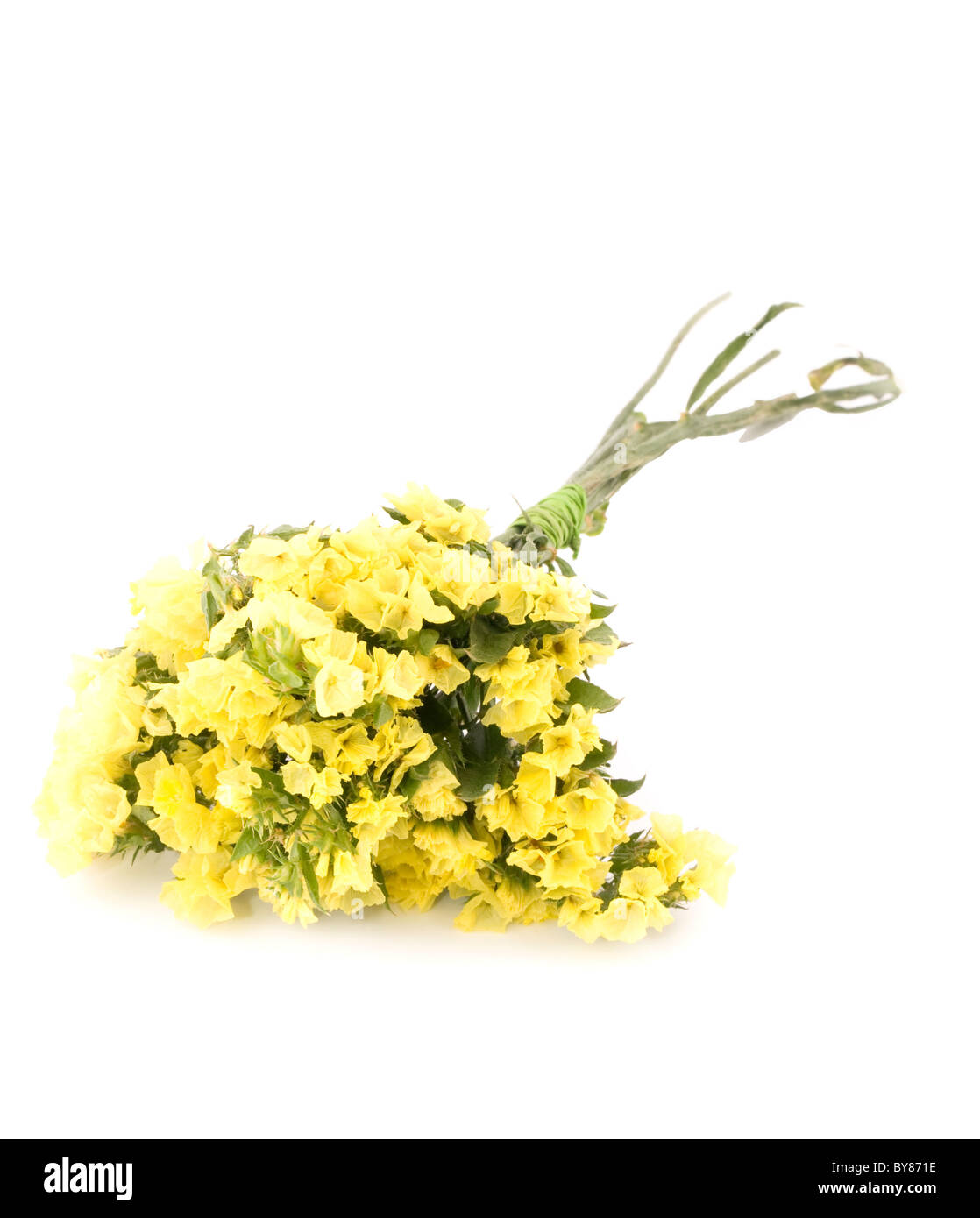 Small bouquet of yellow statice flowers on white background stock small bouquet of yellow statice flowers on white background mightylinksfo