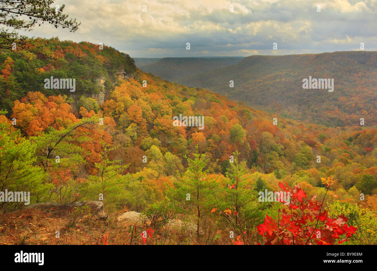 View from Laurel Gulf Overlook Stone Door Trail Savage Gulf State Natural Area Beersheba Springs Tennessee USA & View from Laurel Gulf Overlook Stone Door Trail Savage Gulf State ...