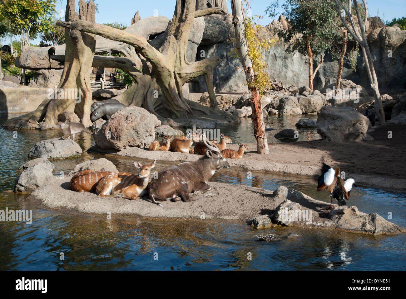 Bioparc Valencia spain zoo animals biopark Stock Photo, Royalty Free Image: 3...