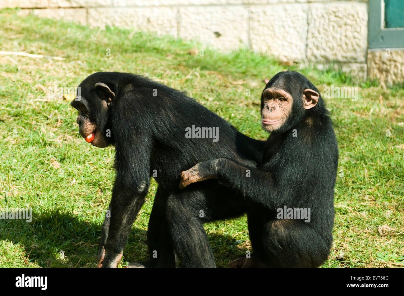 Cute Chimpanzee | www.pixshark.com - Images Galleries With ...