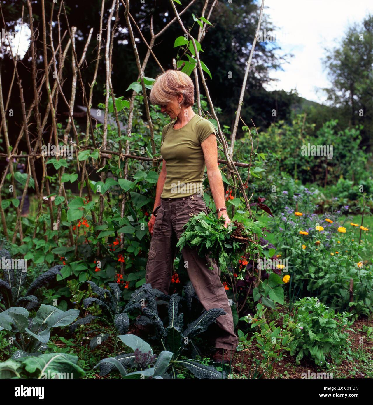 Organic Vegetable Gardening - A woman by runner beans growing in her organic vegetable garden in carmarthenshire wales uk kathy dewitt