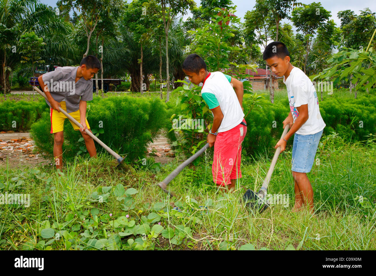 Children gardening in the vegetable garden  Margaritha children s home   Marihat  Batak region  Sumatra island  Indonesia  Asia. Children Gardening In The Vegetable Garden  Margaritha Children s