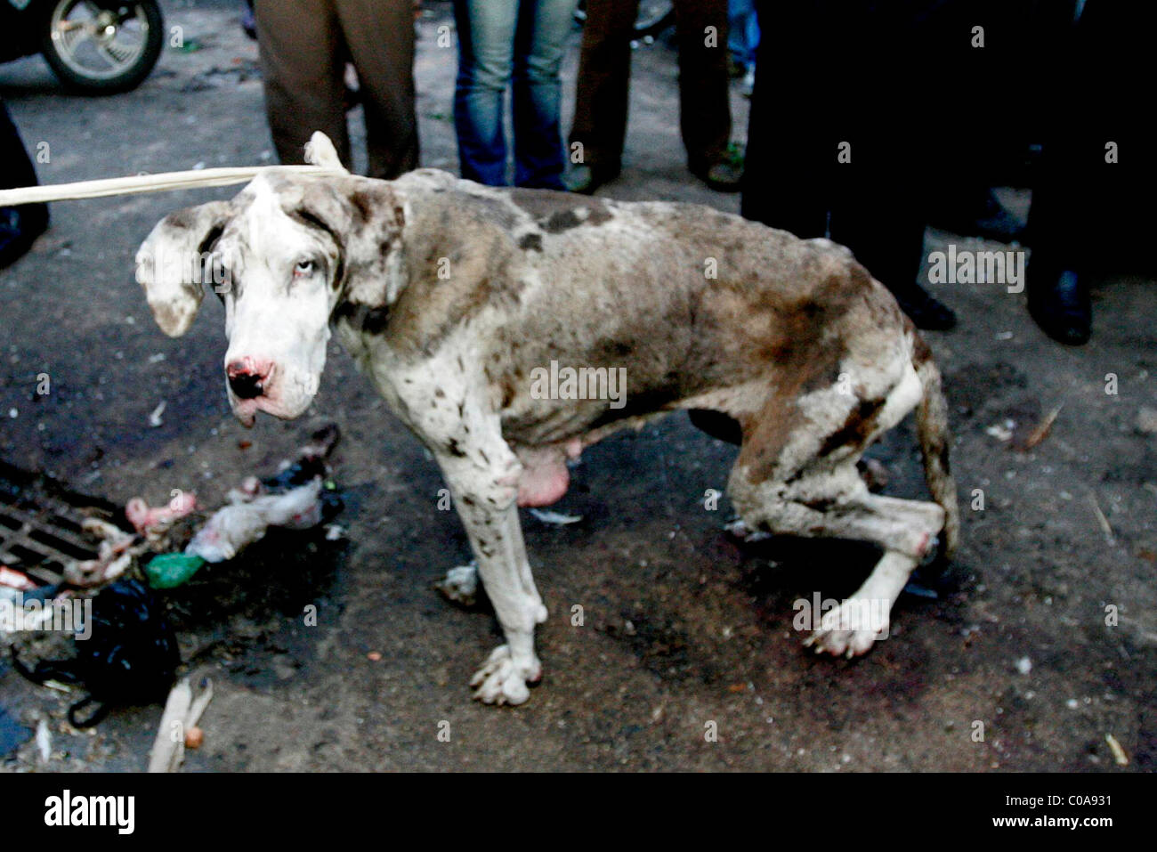 CHINA BLASTED AFTER DOG SLAUGHTER Animal-rights ... - photo#42