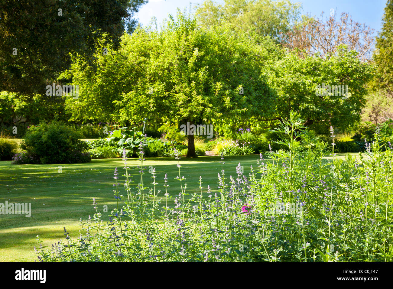 The Lawn Of An English Country Garden Surrounded By Trees