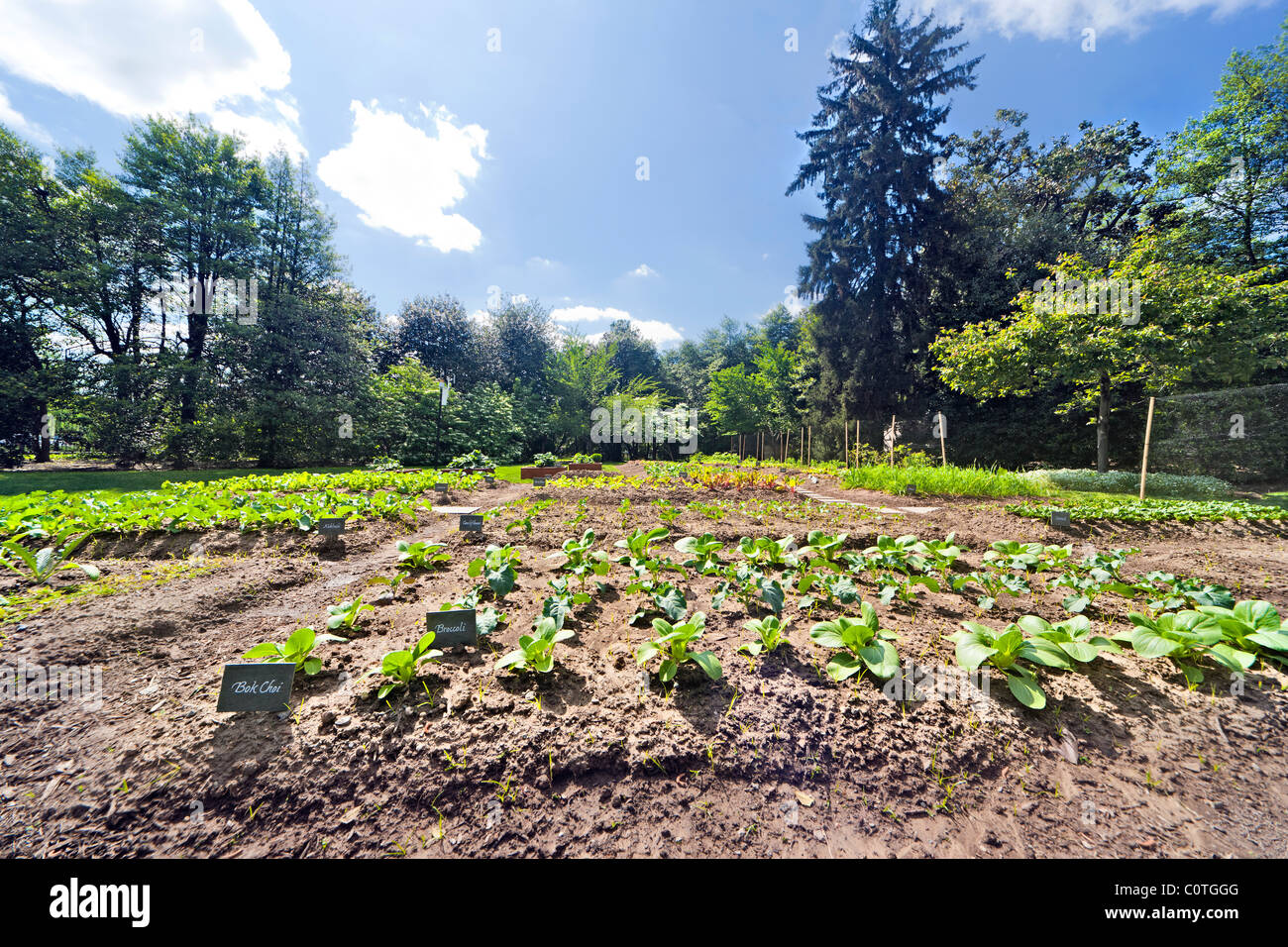 Michelle Obama\'s organic Kitchen Garden of The White House in spring ...