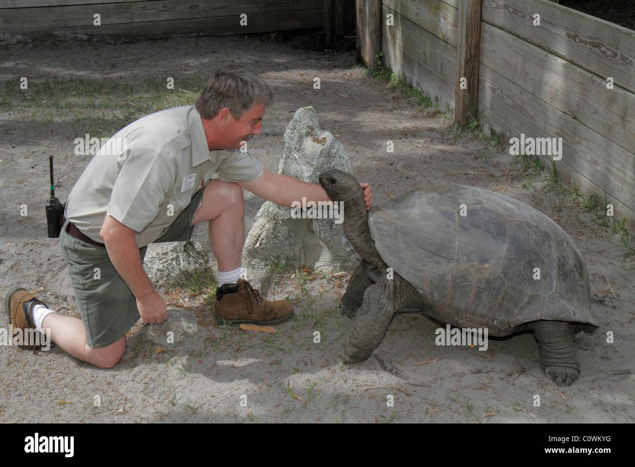 Orlando Florida Sanford Central Florida Zoo U0026 And Botanical Gardens Aldabra  Tortoise Dipsochelys Dussumieri Reptile Man Zookeepe