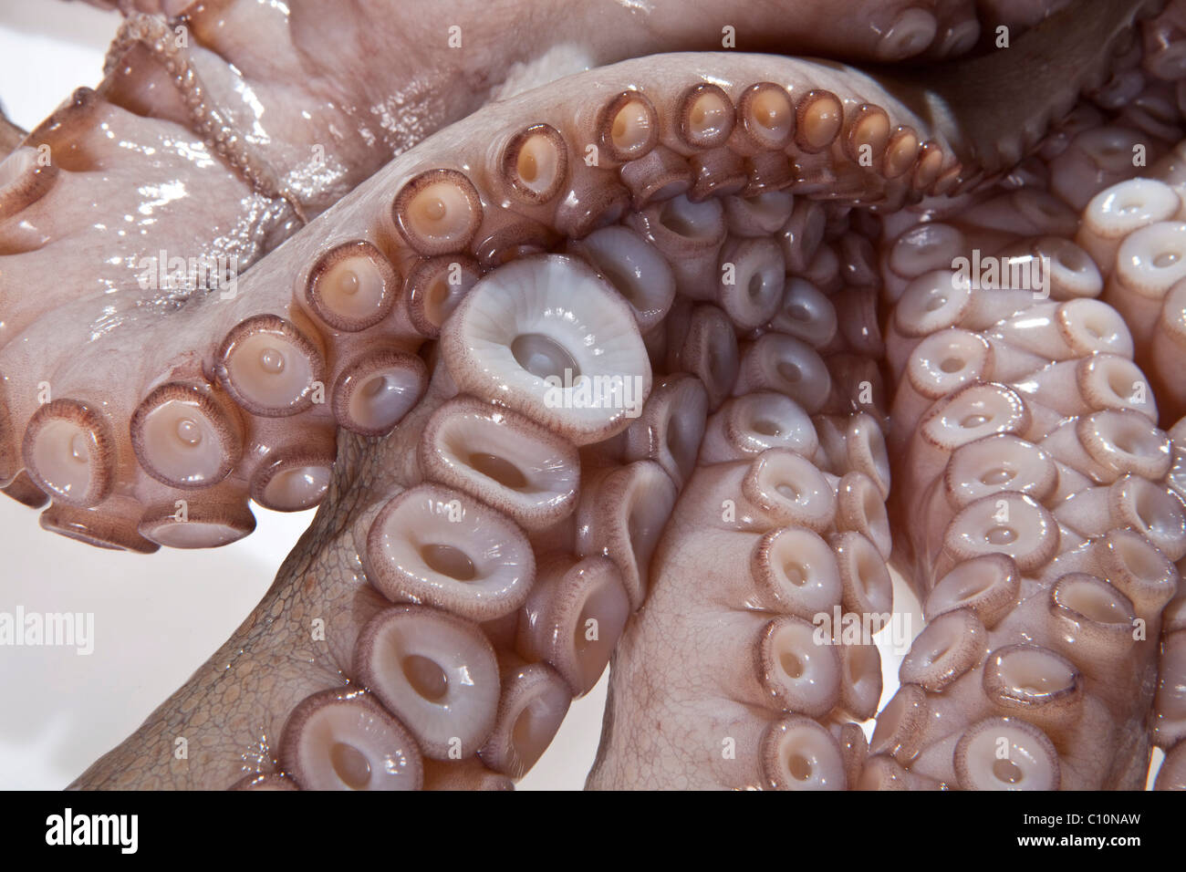 squid tentacles suckers stock photo royalty free image