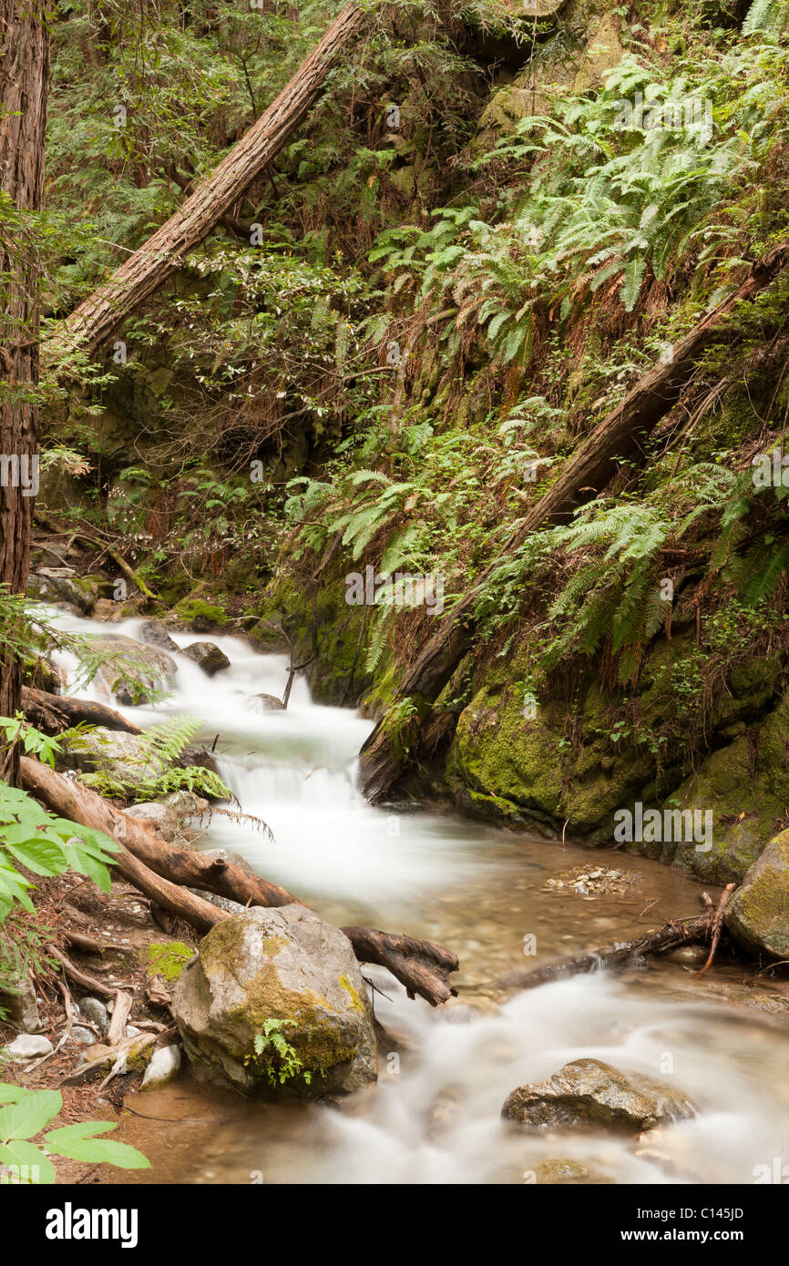 Limekiln State Park Trails