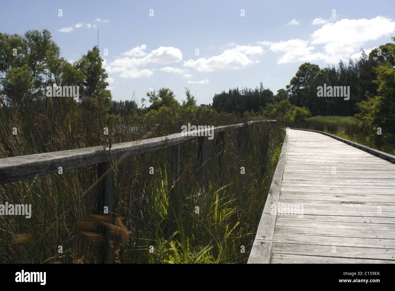Boardwalk Through The Mangroves Bicentennial Park Homebush Sydney NSW Australia