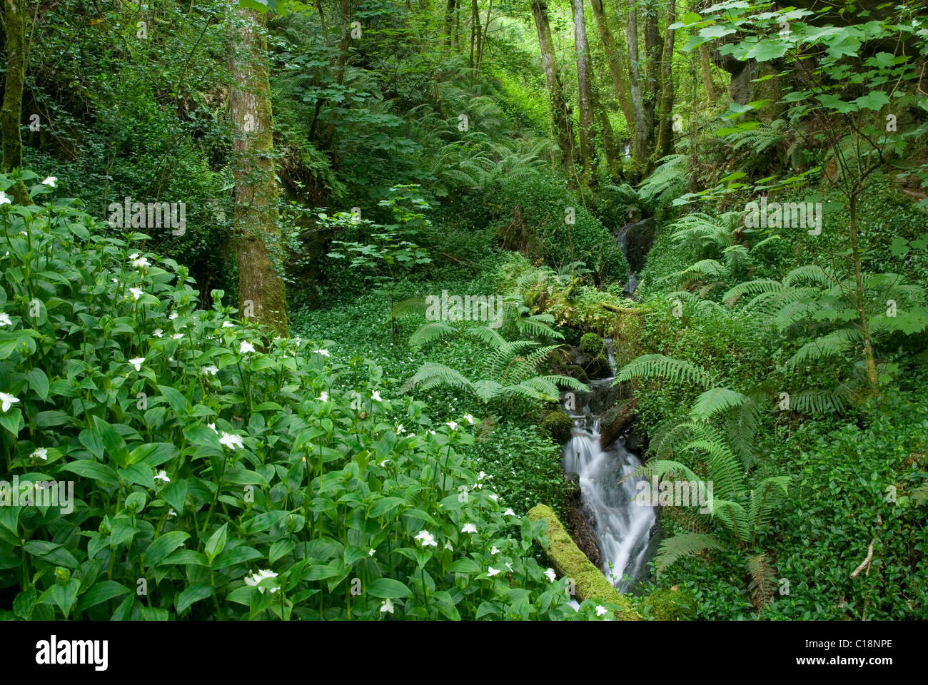 deciduous and temperate evergreen forest