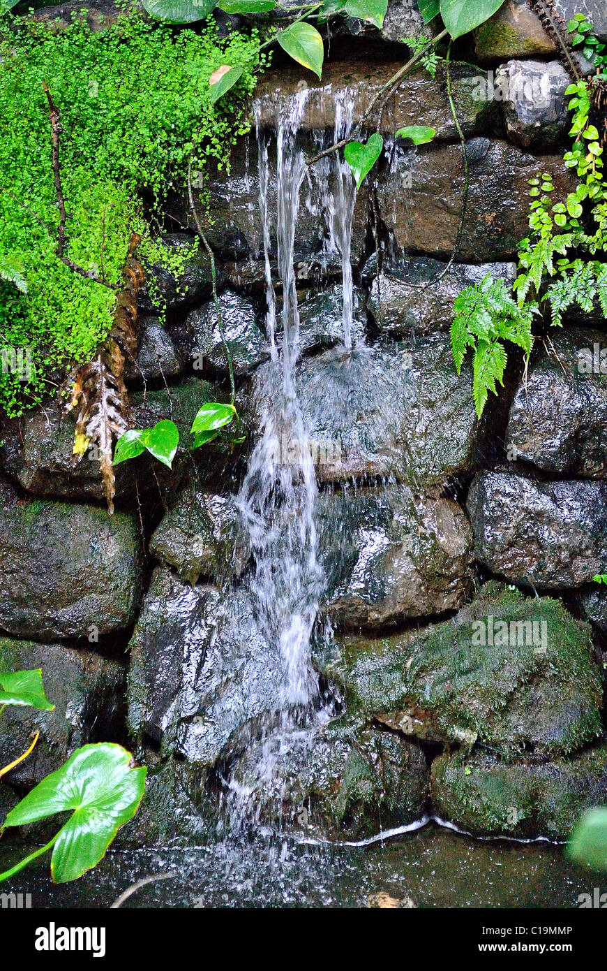 a mini waterfall rock pool inside of sunderland winter garden