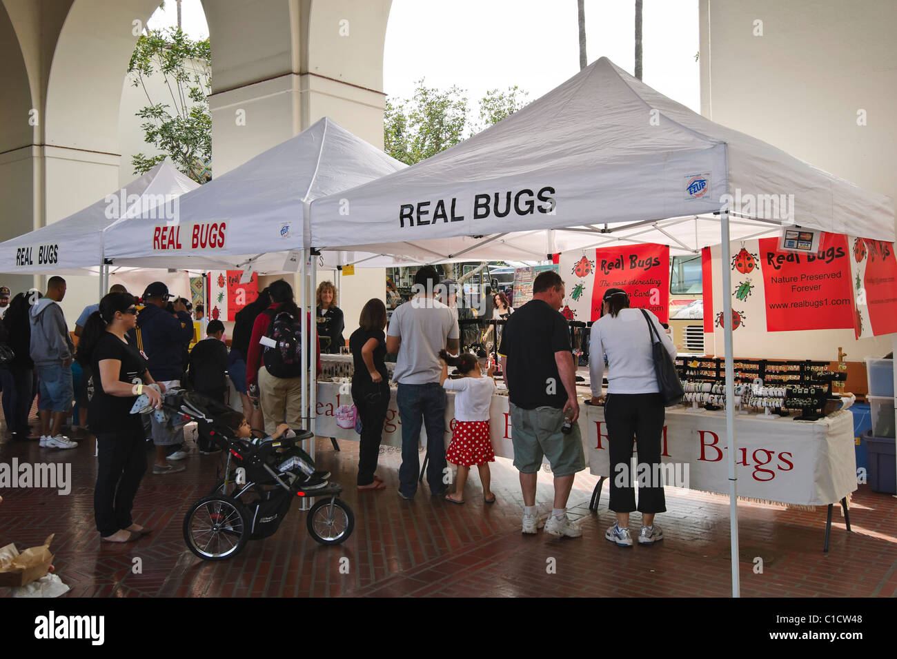 Real Bugs tent sells real insects and bugs in clear resin in many forms including jewelery and decorations & Real Bugs tent sells real insects and bugs in clear resin in many ...