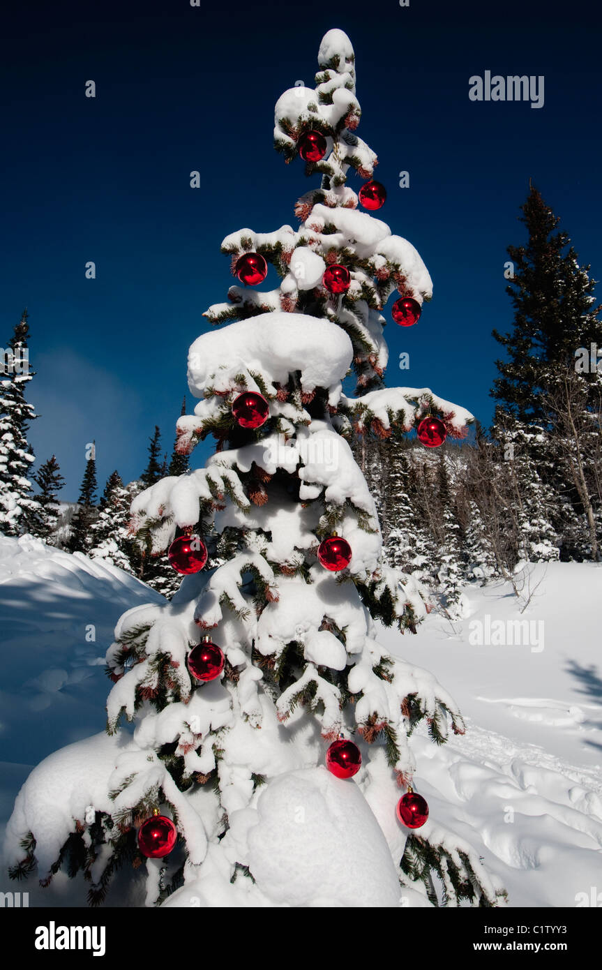 Low angle view of a snow covered Christmas tree, Dream Lake, Estes ...