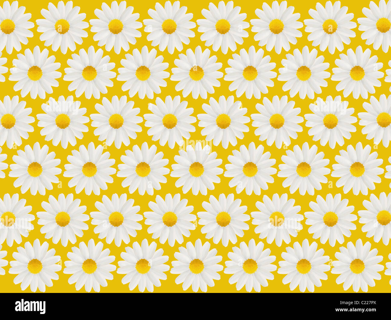 mothers day card with white daisies in a pattern isolated