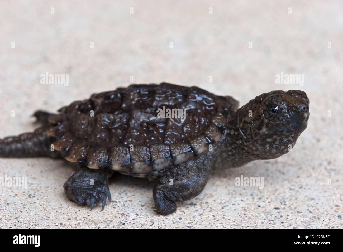 Baby Turtles Myrtle Beach Sc