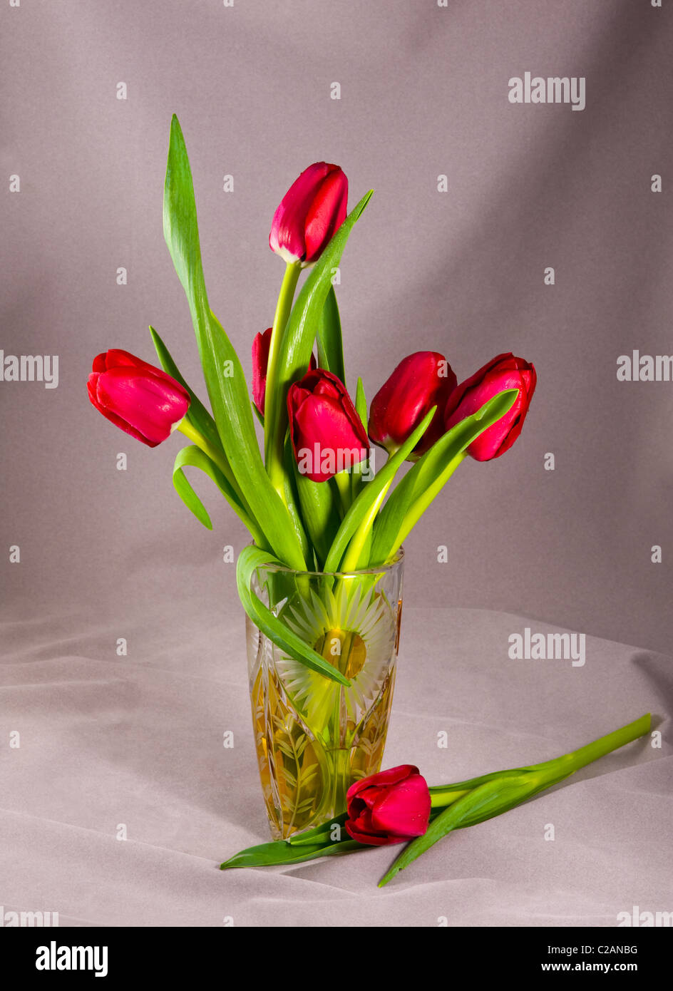 Red tulips in crystal glass vase dew drops mist water on flowers red tulips in crystal glass vase dew drops mist water on flowers composition arrangement still life table top set up cut out reviewsmspy