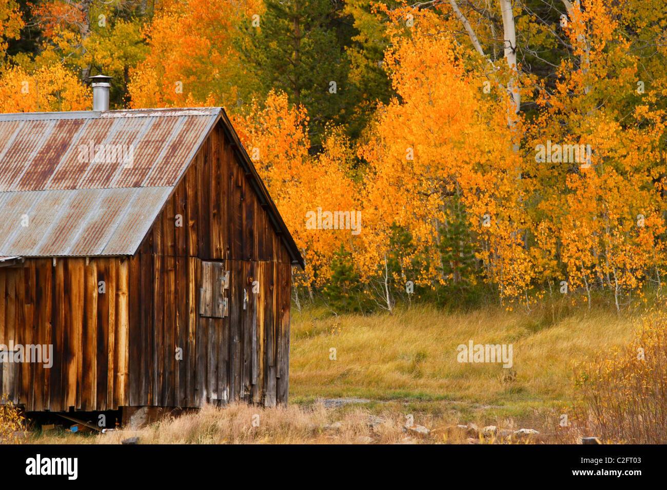 A rustic cabin in autumn in hope valley in the sierra for Sierra nevada cabine