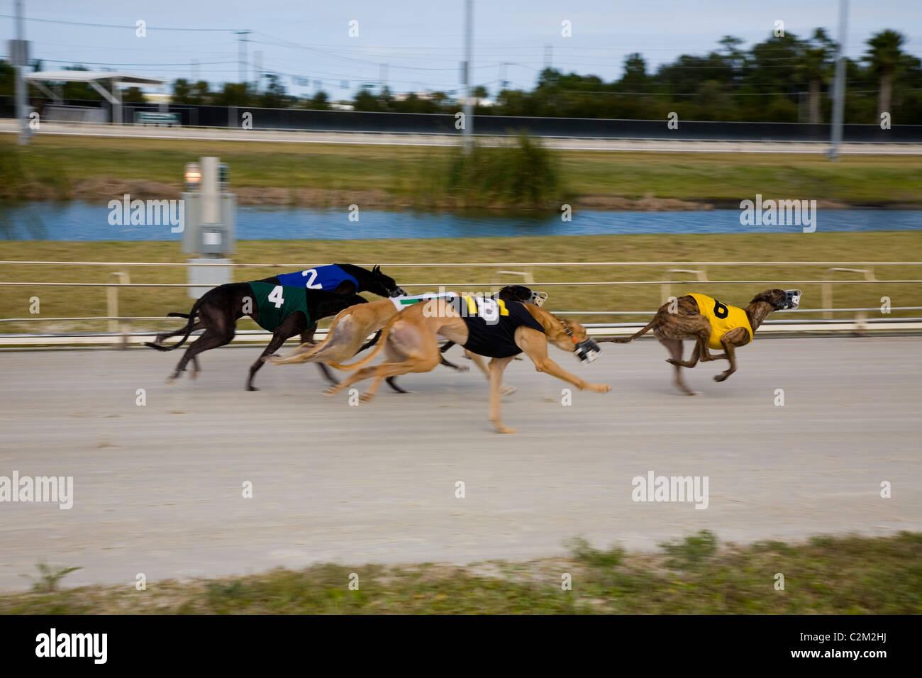 Greyhound Racing Daytona Beach Florida