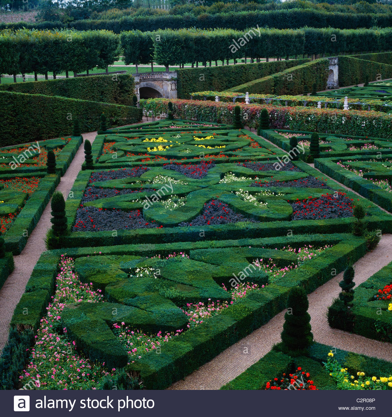 Box Hedges, Topiary Shapes And Dwarf Dahlias   Garden Of Love At Chateau De  Villandry