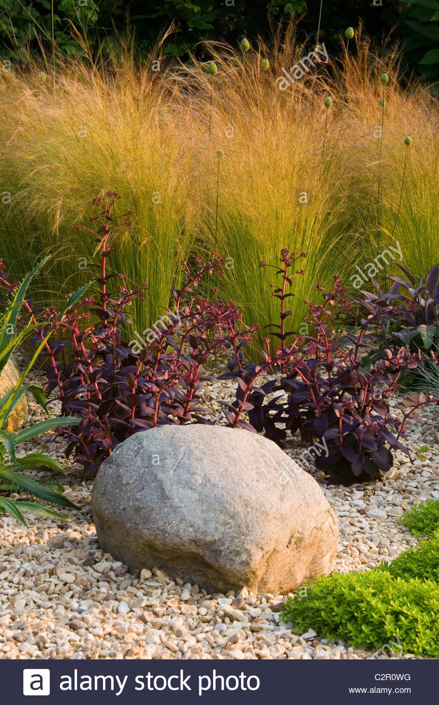 Clare Matthews Garden Blog Free Chive Edging Is Looking: Gravel Border With A Rock, Stipa Tenuissima, Salvia And