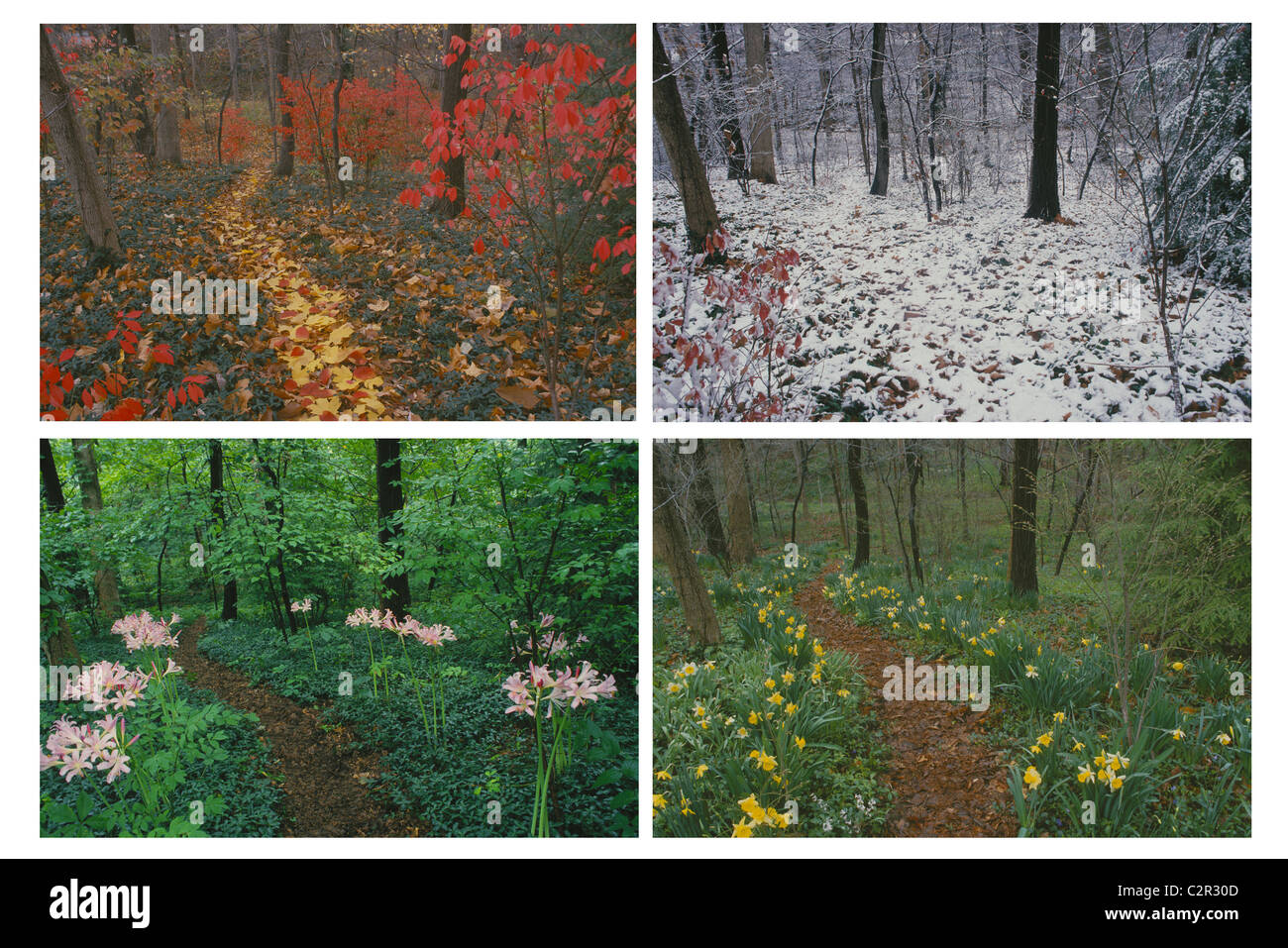 four seasons of a wooded path in backyard images available stock