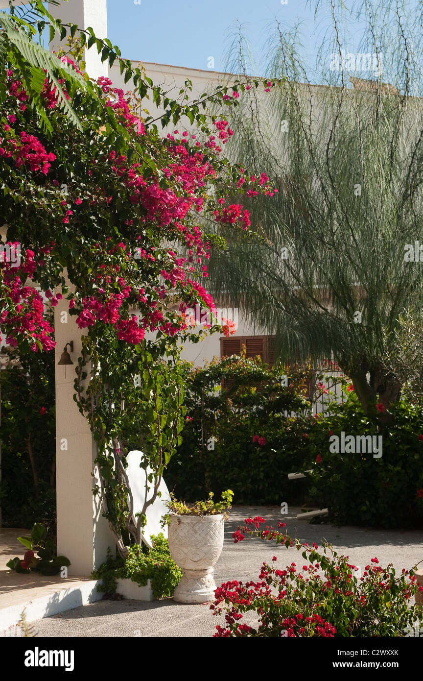 pretty view of plants and flowers in a courtyard in the popular