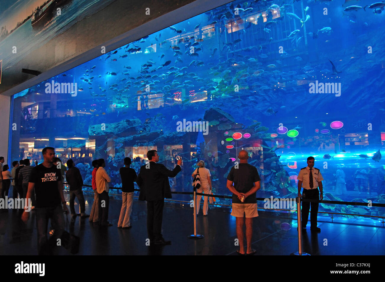 dubai aquarium underwater zoo the dubai mall downtown dubai stock photo royalty free image