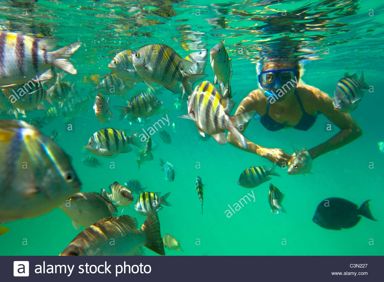 mexico quintana roo xel ha nature park tourist snorkeling and