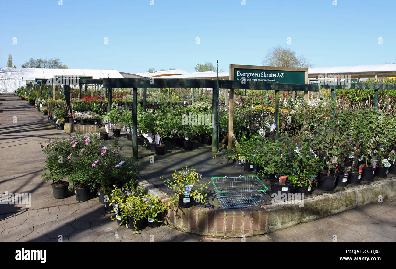 Prepossessing Garden Centre Uk Sale Stock Photos  Garden Centre Uk Sale Stock  With Licious Plants For Sale At Bridgemere Garden World Nursery And Garden Centre Near  To Nantwich Cheshire With Charming Wooden Garden Benches For Sale Also Quest Garden In Addition Garden Clay Pots And Gardener Salary Uk As Well As Covent Garden Fire  Stone Additionally Garden Tools India From Alamycom With   Licious Garden Centre Uk Sale Stock Photos  Garden Centre Uk Sale Stock  With Charming Plants For Sale At Bridgemere Garden World Nursery And Garden Centre Near  To Nantwich Cheshire And Prepossessing Wooden Garden Benches For Sale Also Quest Garden In Addition Garden Clay Pots From Alamycom