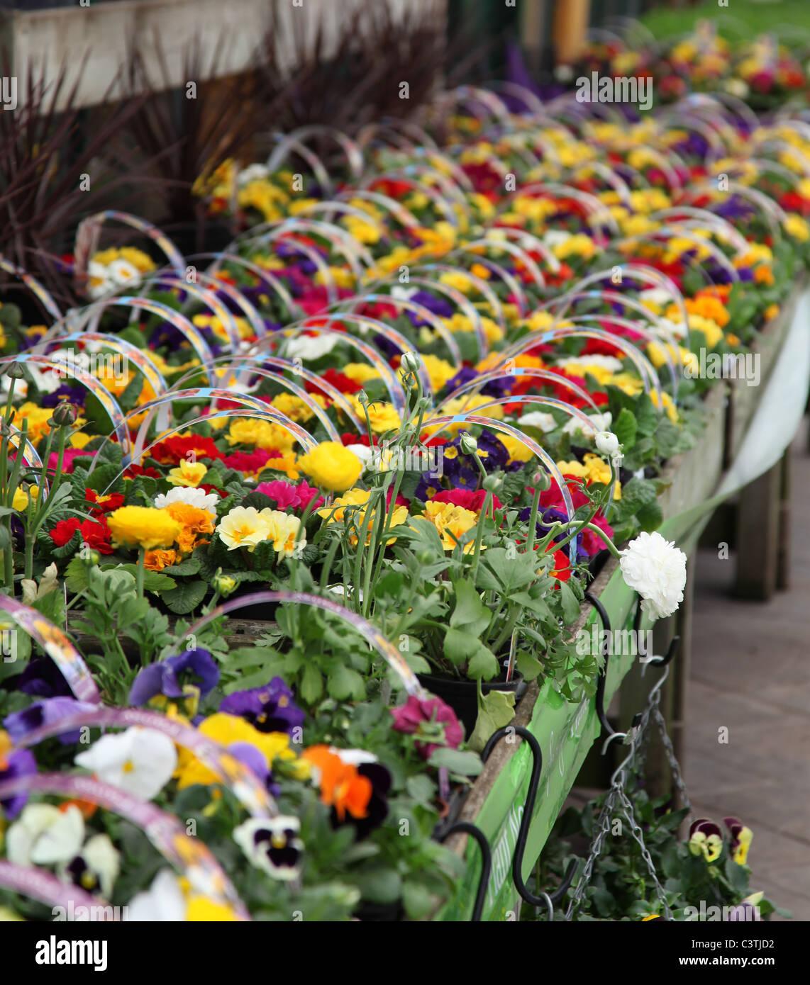 Plants For Sale At Bridgemere Garden World Nursery And Garden – Plant World Nursery and Garden Center