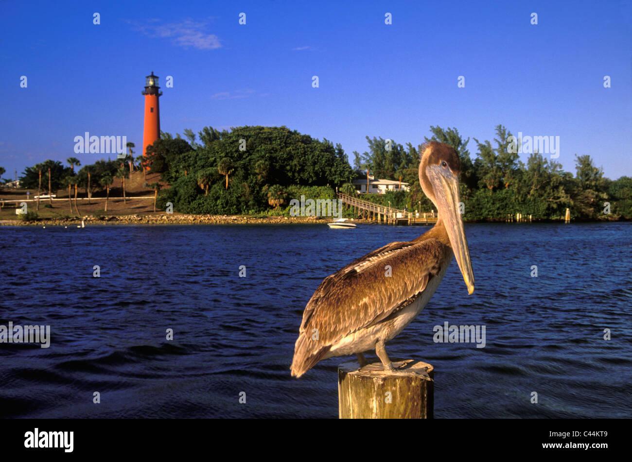 Palm Beach Inlet Dock