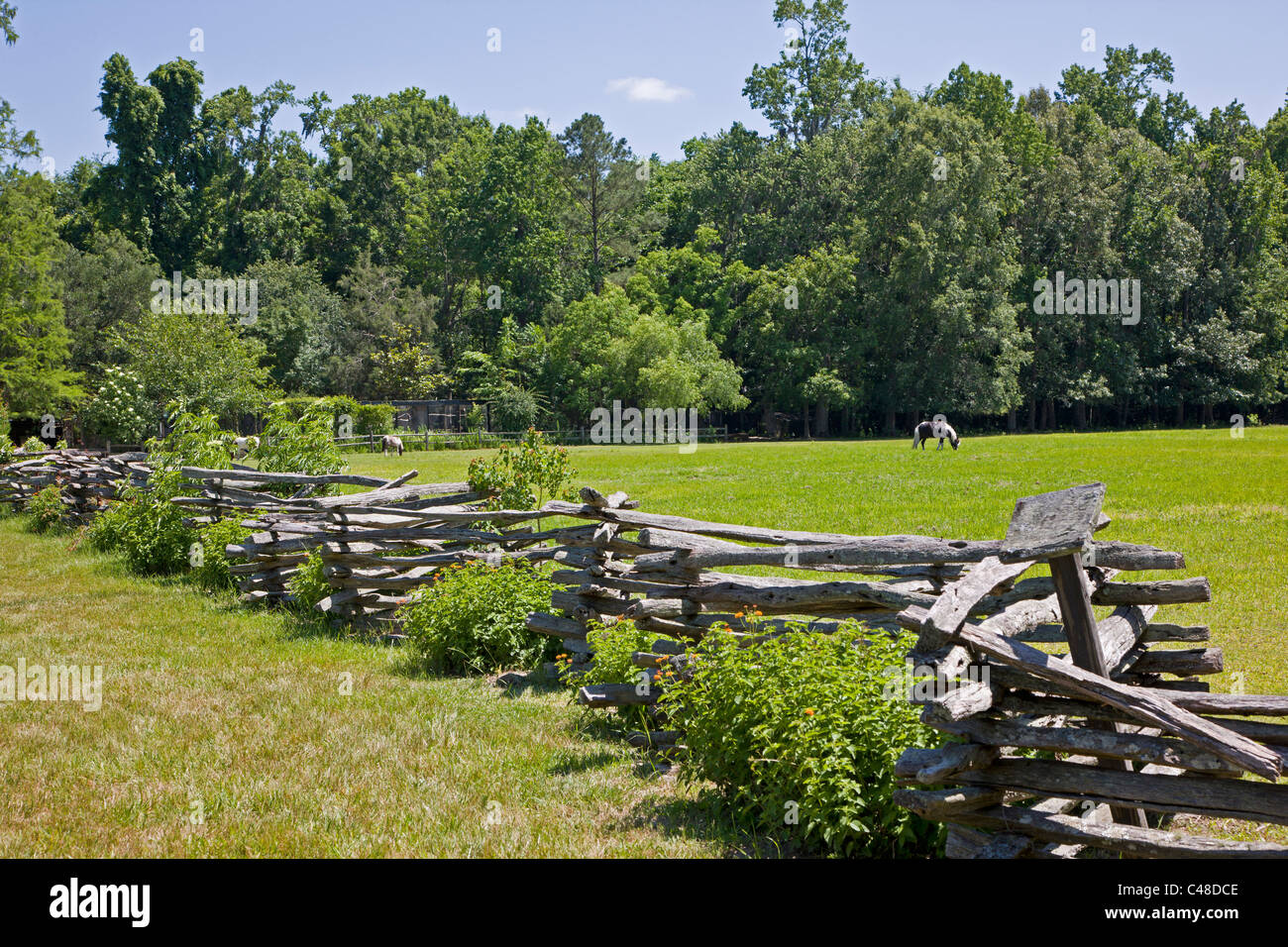 Old split rail fence in the gardens at magnolia plantation